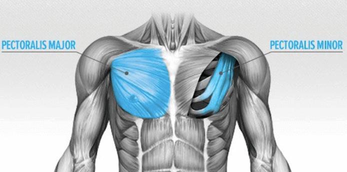 göğüs hareketleri